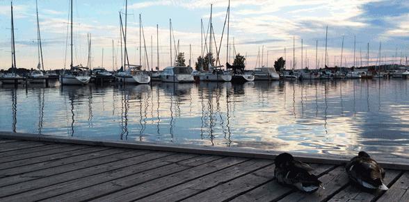 Hafen in Västerås mit Enten im Vordergrund