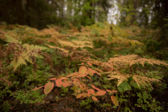 Mystischer Wald in Schweden im Herbst