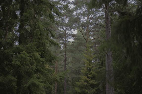 Mystik in schwedischem Wald